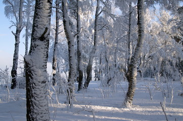 Winter forest on the seashore.