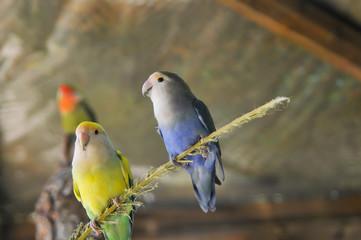 Papagaio num parque natural