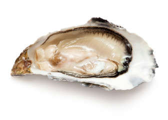 single opened ready to eat oyster isolated on white background