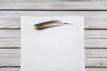 Feather on a blank sheet of paper as a symbol of poetry. Writing and poetry concept. Copy space.