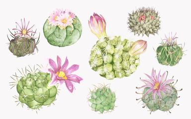 Hand drawn of cactus illustration