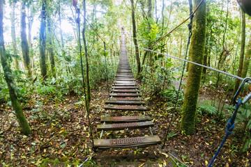 Suspension bridge in the forest of Monte Verde, Costa Rica
