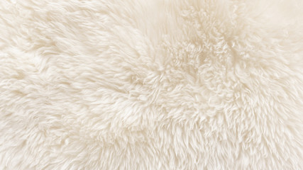 White wool texture background, cotton wool, white natural sheep wool, beige fluffy fur, fragment...