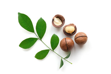 Isolated aromatic macadamia nuts with green twig on white background. Top view.