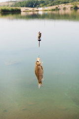Small caught fish hanging at fishing line above water in the background of the landscape