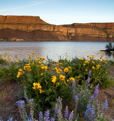 Spring Wildflowers Banks Lake Devil's Punch Bowl Eastern Washington State