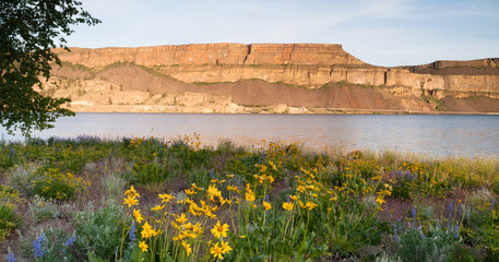 Spring Wildflowers Banks Lake Devil's Punch Bowl Eastern Washington State