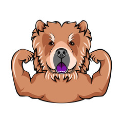 Chow chow dog with muscules.  Illustration Portrait of dog.