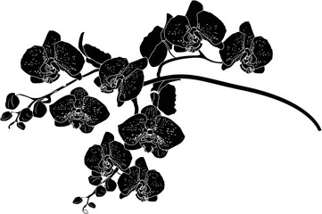orchid branch sketch isolated on white