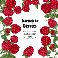 Hand drawn background with summer berries. Raspberry branches isolated on white. Vector colored sketch illustration.