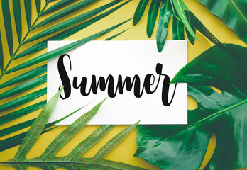Summer text with tropical leaf on color background.summer, nature