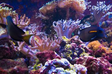 pesci colorati tropicali in acquario