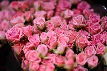 Background of a amazingly beautiful pink roses