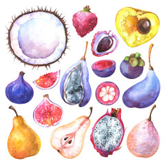 Hand painted exotic fruits set. Watercolor collection of coconut, fig, canistel, pear, mangosteen, pitaya, lychee, akebia quinata isolated on white background