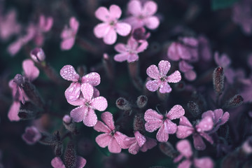 Pattern of small pink flowers with rain drops.