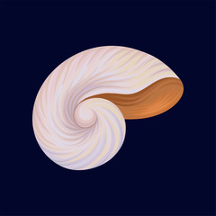 Snail house or shell, empty shell of a sea mollusk vector Illustration on a dark blue background