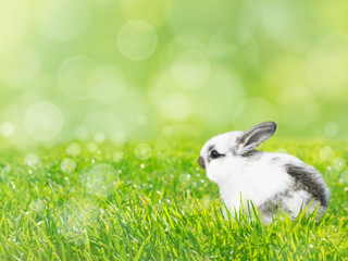 White Easter rabbit on the green grass lawn spring background