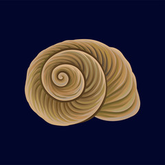 Spiral snail house or shell, empty shell of a sea mollusk vector Illustration on a dark blue background