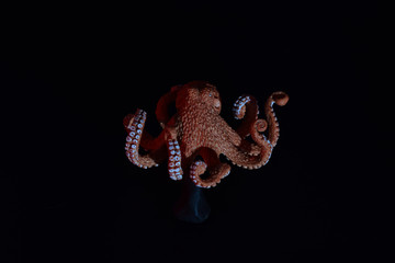 Child's toy octopus with colored gels.