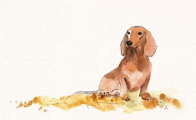 cute dachshund waiting