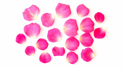 Petals of pink rose on a white background.