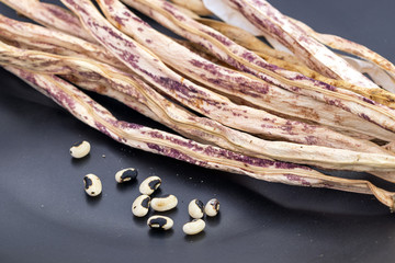 Dried Green-purple or Tiger pattern Yard Long Bean with seed ready for cropping