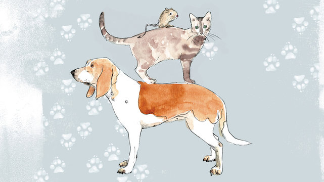 dog cat and mouse