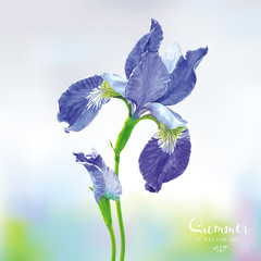 Blue Iris vector flower