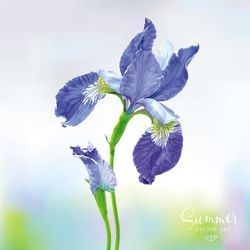 Blue Iris vector flower