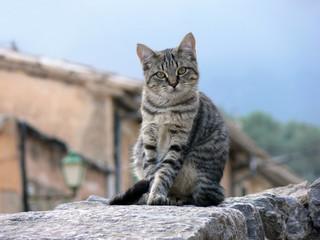 kleine grau getigerte Katze sitzt auf einer Mauer vor einem traditionellen Haus auf Mallorca/Spanien