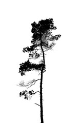 Black and white silhouette of a lonely single pine tree