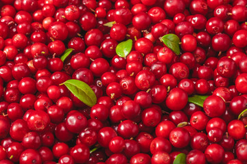 Fresh organic cranberries with green leaf over it - close up shot