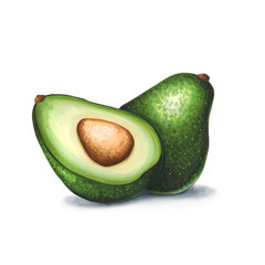 Avocado on a white background. Sketch done in alcohol markers
