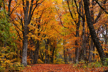 Path in the autumn golden forest