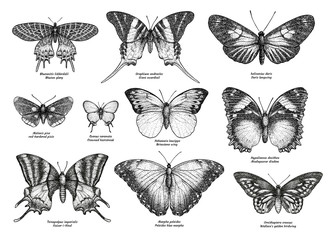 Tropical butterfly collection, illustration, drawing, engraving, ink, line art, 