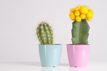Cactus Vanilla Pastels Trendy Color
