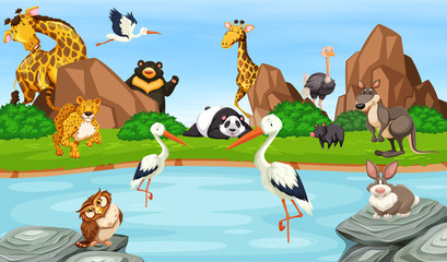 Many wild animals by the pond