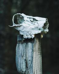 Animal Death - Deer Skull on a Post