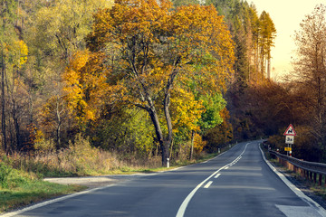 Awesome view of the asphalt road in the autumn scenery.