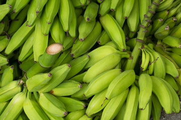 pile of green banana , cooking bananas or plantain