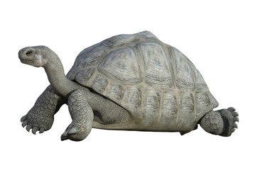 Giant Tortoise isolated on white. 3d render
