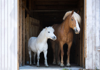Two horses in a stable.