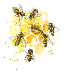 Bees and honeycombs. Watercolor hand drawing illustration