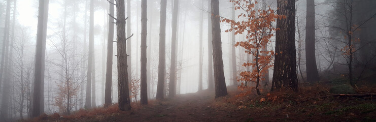 Panoramic view to the misty forest