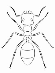 illustration of ant , vector draw