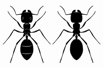 silhouette of ant , vector draw