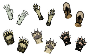 Paws of animals or footprints and wildlife. hands of monkey and dog, bear, cat and hoof of cow. Domestic or farm or pets. Traces of mammals.
