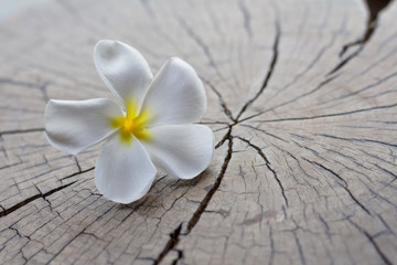 Beautiful wet tropical flower on wood background.for summer.