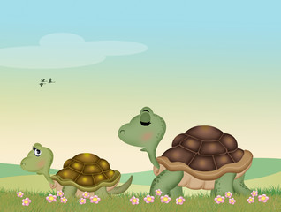 turtles in the meadow