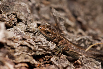 A picture of a lizard on a tree.